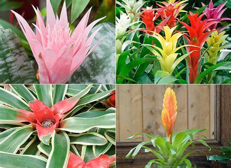 des plantes exotiques pour votre int 233 rieur