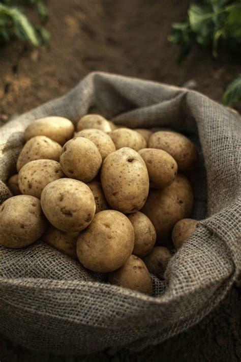 potatoes aesthetic potatoes aesthetic kartoffeln