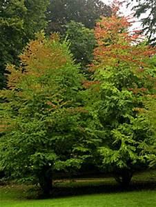 Dekorative Bäume Für Kleine Gärten : b ume f r kleine g rten jetzt setzen radio salzburg ~ Markanthonyermac.com Haus und Dekorationen