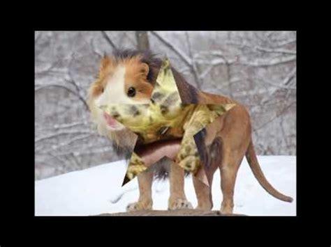 Top 10 Most Bizarre Species Animal Planet Strange