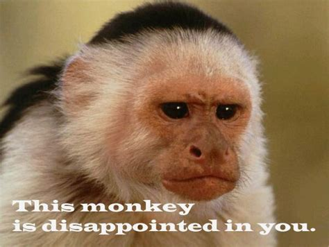Monkey Face Meme - this monkey is disappointed in you meme collection