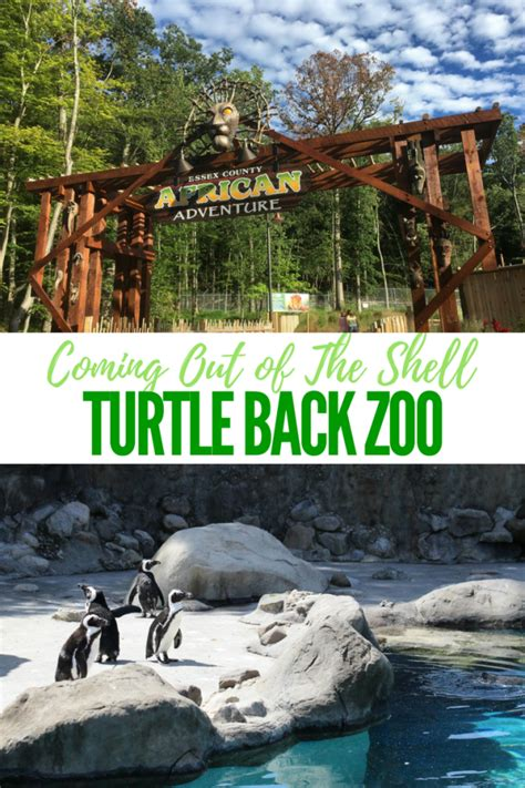 Turtle Back Zoo Is Coming Out Of The Shell  Mommy University