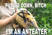 Anteater Meme - i m an anteater image gallery sorted by favorites know your meme