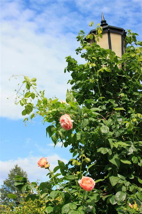 international test garden portland oregon partaste