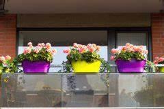 Geranien Gelbe Blätter : geranien im balkonkasten berwintern so geht 39 s ~ Orissabook.com Haus und Dekorationen