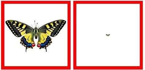 Uzdevums ar lupu - atrodi tauriņu - Dzīvnieku pasaule ...