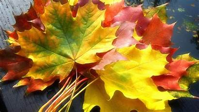 Fall Autumn Leaves Nature Wallpapers 1366