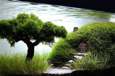The Best Aquascape by Top 10 Best Exles Of Aquascaping