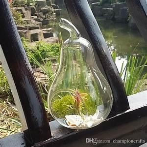 Glass Apple/Pear Shape Terrarium-Air Plant Holder,Moss
