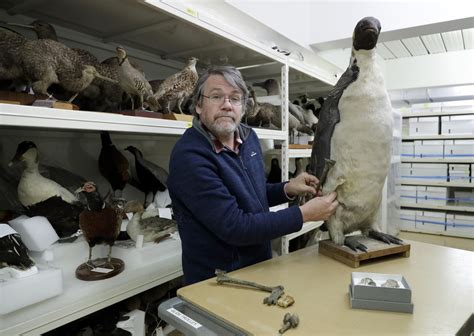 Jaunzēlandē atrasti pingvīna kauli, kas liecina, ka tie ...
