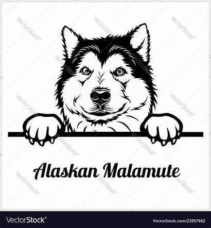 Peeking Alaskan Head Malamute Breed Dogs Face