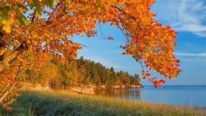 Schöne Herbstbilder Kostenlos : hd herbst hintergrundbilder hd hintergrundbilder ber ~ A.2002-acura-tl-radio.info Haus und Dekorationen