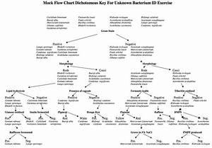 Flow Chart Microbiology Pinterest Charts