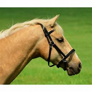 Two Horse Tack - 2 in 1 BITLESS BRIDLE made from LEATHER