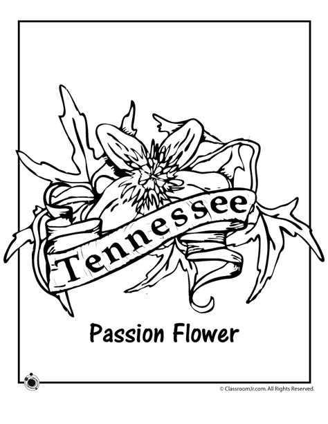 tennessee state flower coloring page woo jr kids