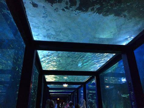bureau de change bordeaux cours de l intendance aquarium grau du roi 28 images aquarium du grau du roi