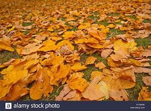 Bäume Umpflanzen Jahreszeit : natur europa deutschland landschaft herbst jahreszeit baum b ume blatt bl tter herbst ~ Orissabook.com Haus und Dekorationen