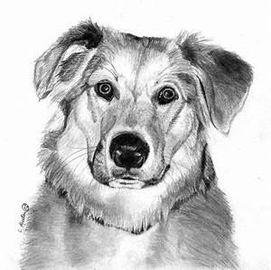 Learn how to draw a dog, graphite art lesson