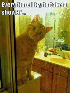 Every time I try to take a shower - Cat - Memes and Comics