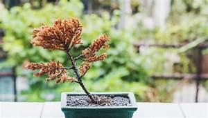 Pflanzen Gießen Urlaub : pflanzen im urlaub 2 tipps f r bew sserung ~ Lizthompson.info Haus und Dekorationen