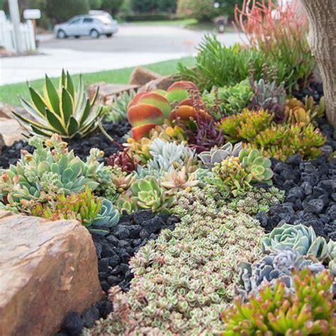succulent landscaping 1230 best images about endless succulent ideas on pinterest