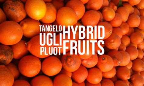 orange hybrid fruit what s a tangelo 5 fruit hybrids you should try honest cooking
