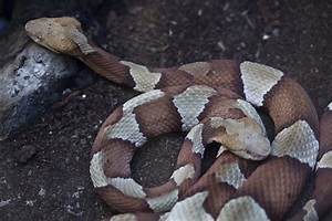 Bee Stings & Snake Bites – Dr. Todd's First Aid Tips ...