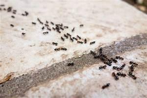 Ameisen Im Haus Ursache : hausmittel gegen ameisen was hilft wirklich plantura ~ A.2002-acura-tl-radio.info Haus und Dekorationen