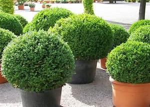Kübelpflanzen Für Terrasse : sechs immergr ne winterharte k belpflanzen auch f r ~ Lizthompson.info Haus und Dekorationen