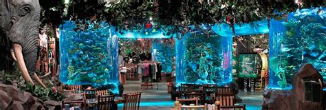 living color aquariums for 20 years living color been global leaders in the design