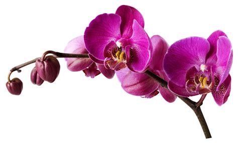 stickers cuisine pas cher stickers orchidée pas cher