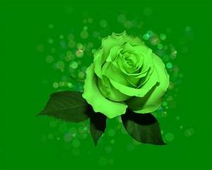 Green Rose HD Wallpapers – Pictures of Beautiful Flowers ...