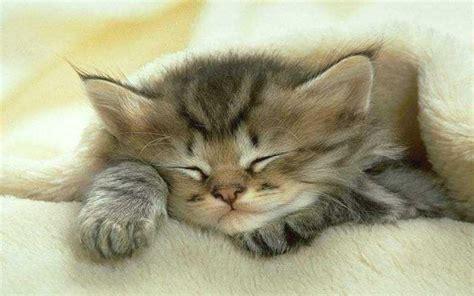 fond d écran mignon image fond d cran chaton mignon fond ecran chat b8ed4815 image fond d cran chaton mignon 0 chats