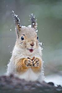 Happy squirrel! | cute | Pinterest