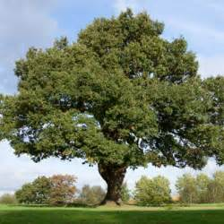 post oak for sale lowest prices guaranteed