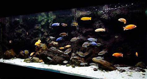 type  fish  stock  tropical freshwater fish tank