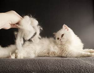 How To Deal With Cats And Shedding