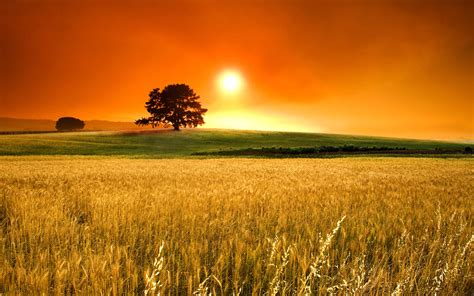 sunny day background    images