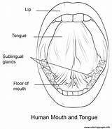 Coloring Mouth Tongue Pages Human Printable sketch template