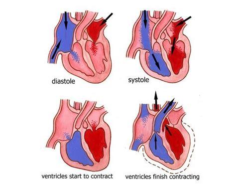illustration heart as a pump diastole systole photo prints 8251563 media storehouse