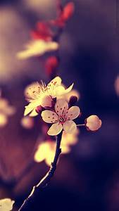 Beautiful Flowers Mobile HD Wallpaper 2