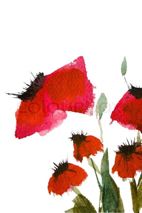 watercolor poppy flowers stock photo colourbox