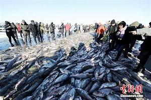 First fish at Chagan Lake's winter fishing earns 21,646[5 ...