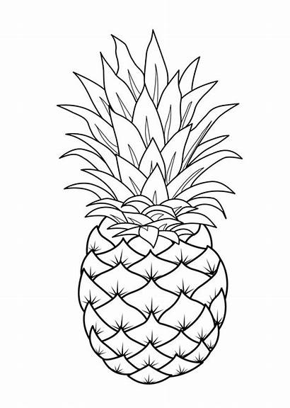 Coloring Fruit Printable Pages Pineapple