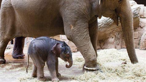 suess elefantenbaby  leipzig zoo erstes bild ansehen