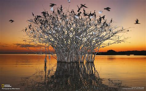 Pantanal wetlands of the birds-National Geographic-Photo ...