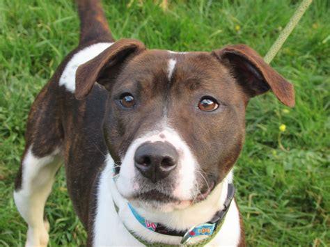 homes needed foredowne kennels dog  cat quarantine