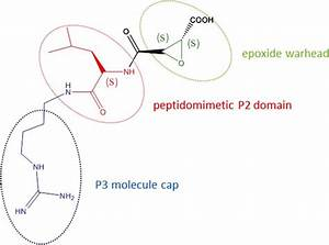 Novel Selective Calpain 1 Inhibitors as Potential ...