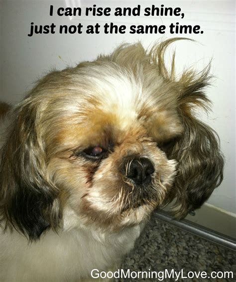Funny Good Morning Memes - cute and funny good morning memes huffpost