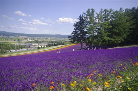 Beautiful Hokkaido Part 1 Furano And Biei Hinds Feet